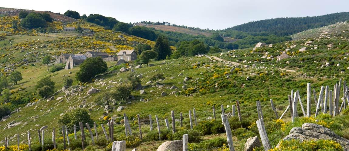 Les sources du Mont Lozère
